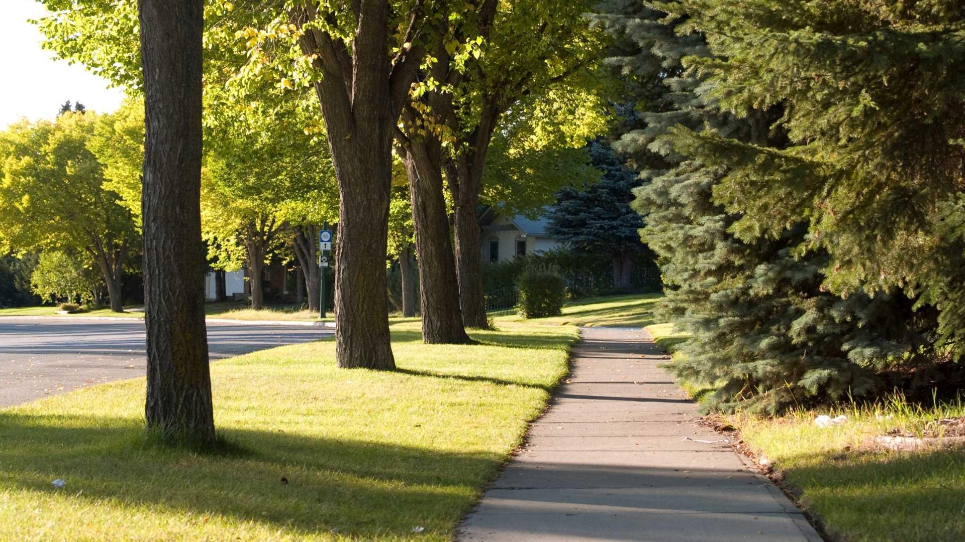 Trees Near Sidewalk