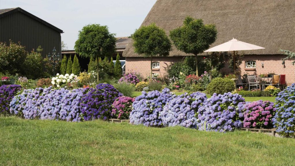 The Best Flowering Shrubs for Yards In The Northeast