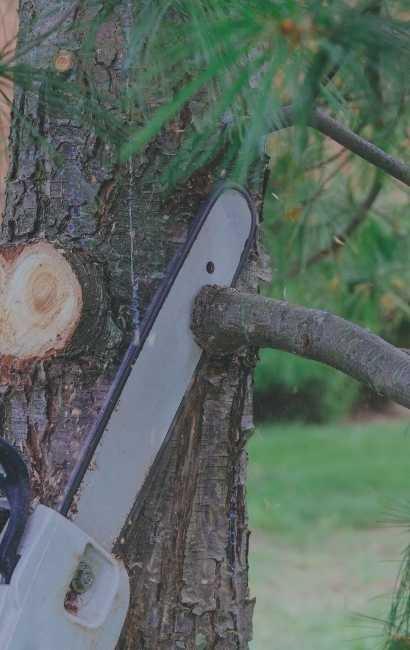 Buffalo Tree Service