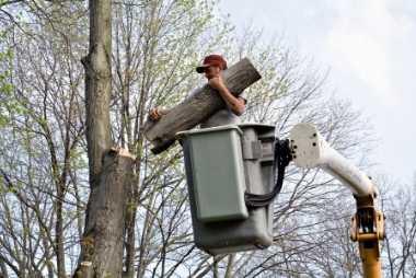 buffalo tree removal service