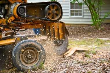 buffalo tree service stump grinding