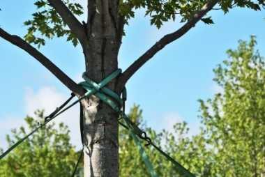 buffalo tree service tree bracing