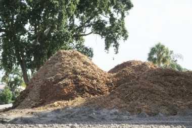 buffalo tree wood chipping