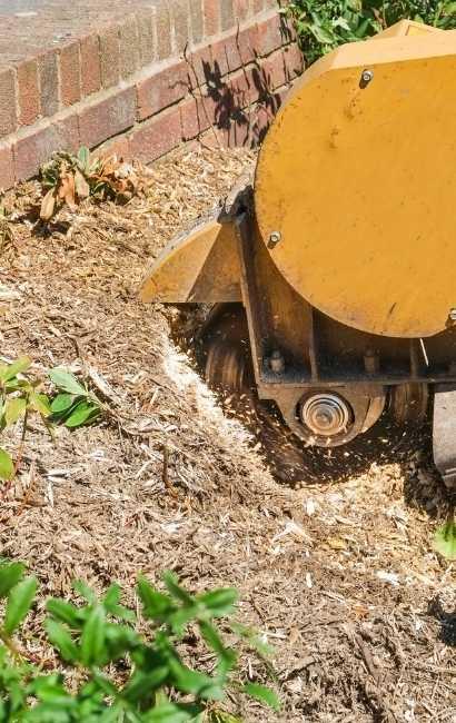 affordable stump grinder near me