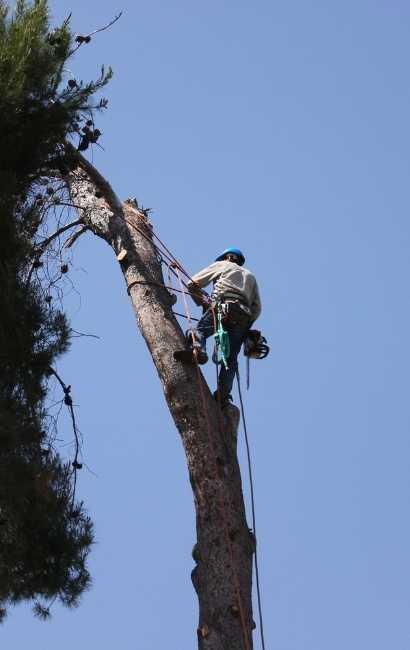 best Tree Removal Buffalo NY