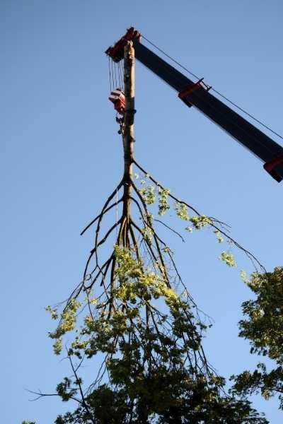 crane Tree Removal Buffalo NY