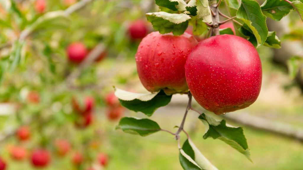 8 Things You Can Do To Start Preparing Fruit Trees for Winter