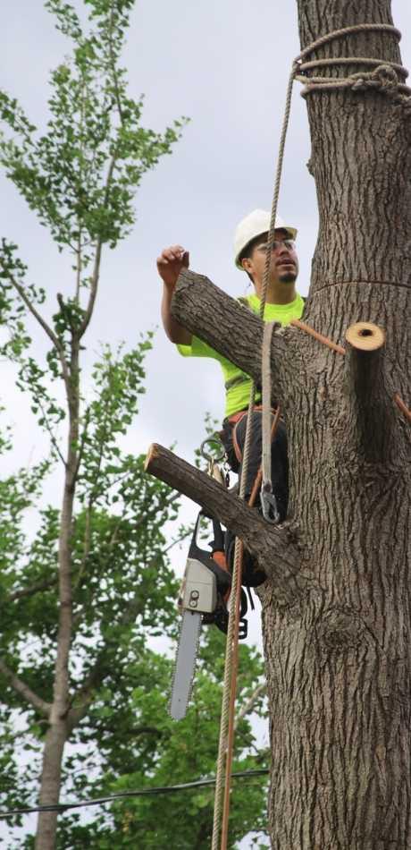 Affordable Eden Tree Service