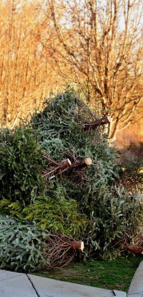 Affordable Evans Tree Service