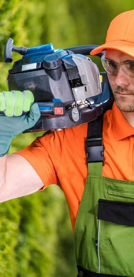 Affordable Hamburg Tree Service