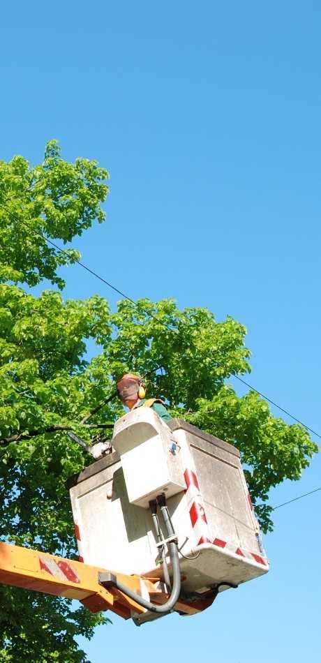 Affordable Lackawanna Tree Service