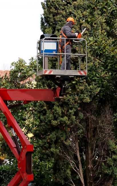 Affordable Lockport tree service