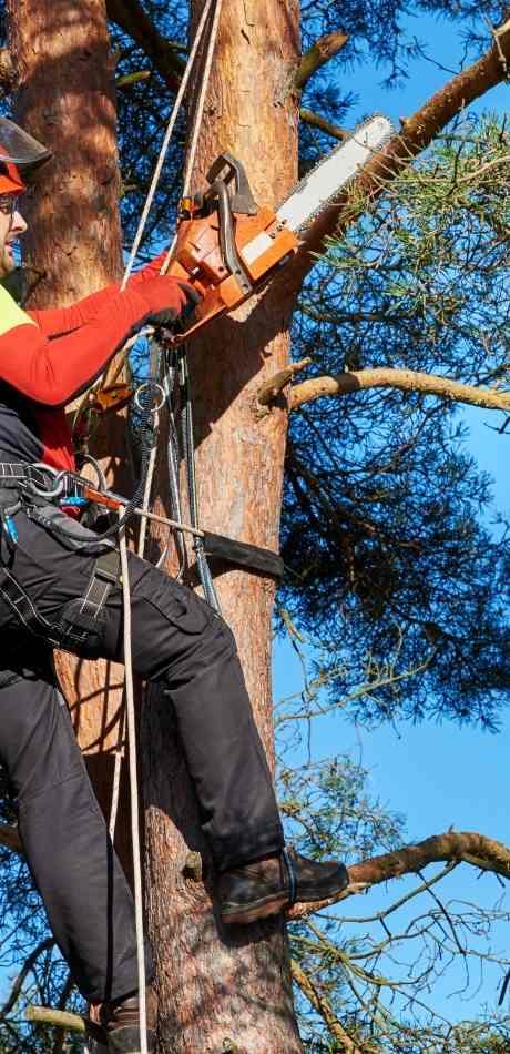 Akron Tree Service