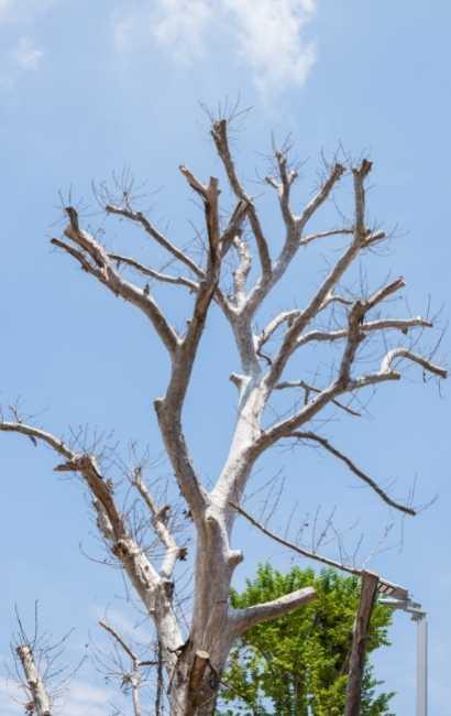 Best Grand Island Tree Service near me