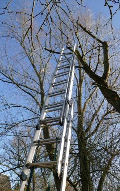 Best Kenmore Tree Service near me