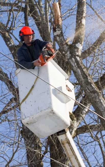 Best Lackawanna Tree Service