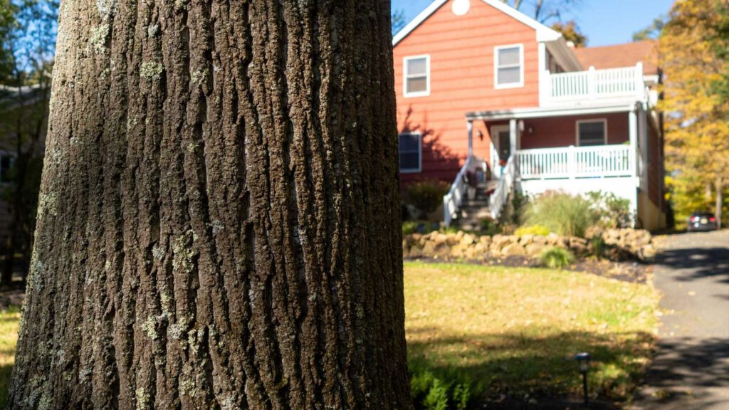 Choosing the Best Trees To Plant Near Your House