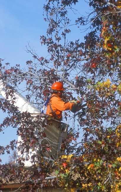 Lake View tree service near me