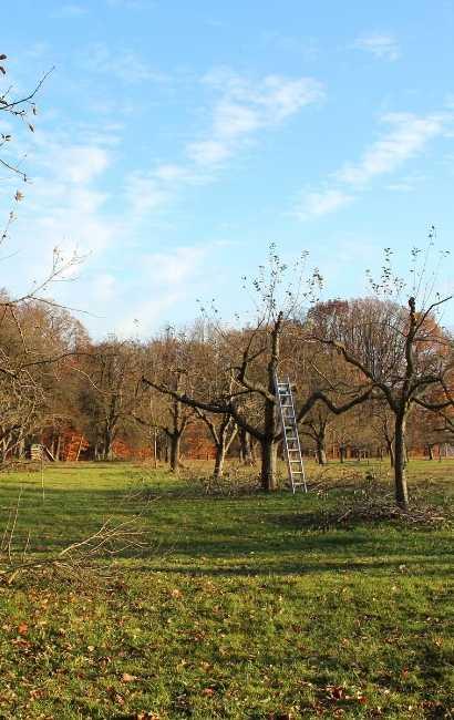 Lockport tree service near me