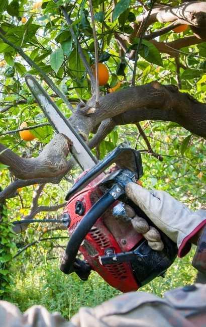 Newstead tree service near me
