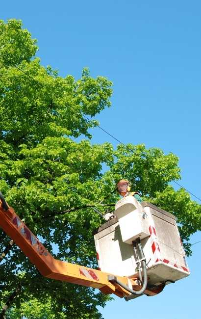 Niagara falls tree service