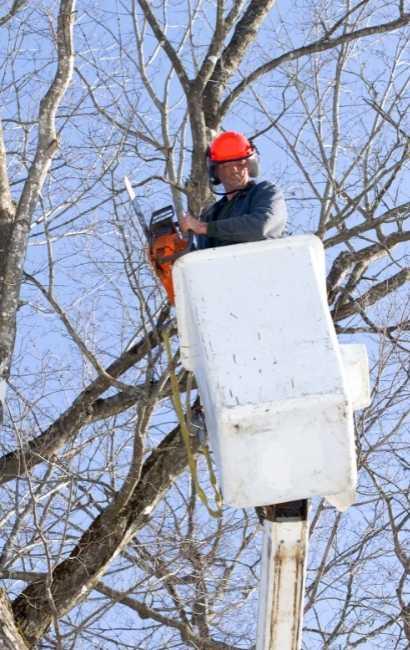 Silver Lake tree service near me