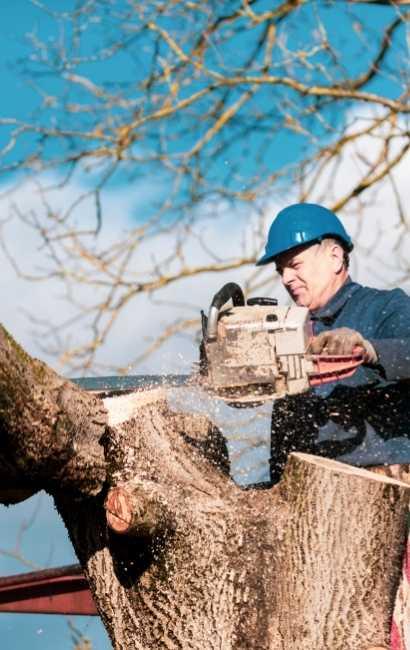 South Buffalo tree service near me