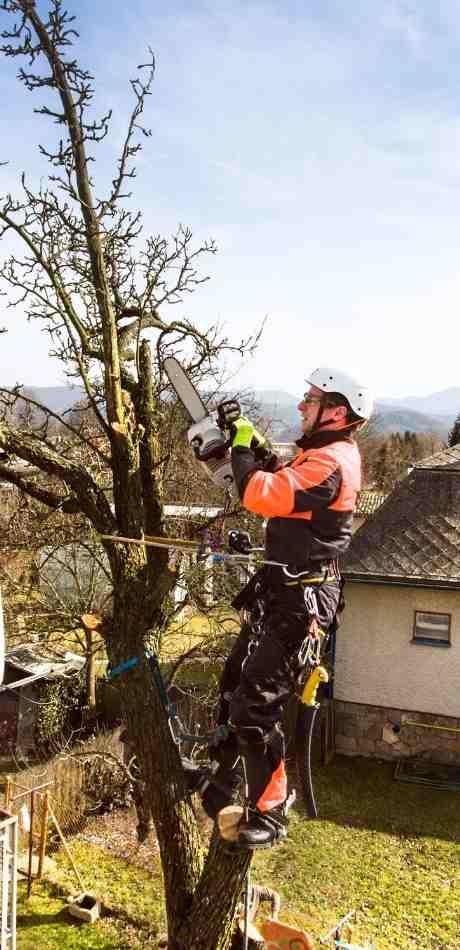 Blasdell Tree Service