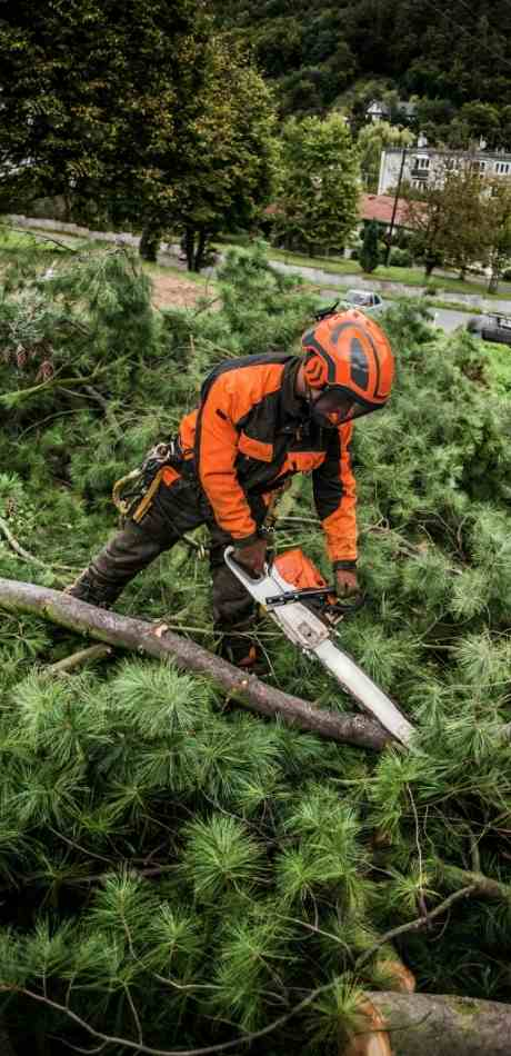 Clarence Center Tree Service