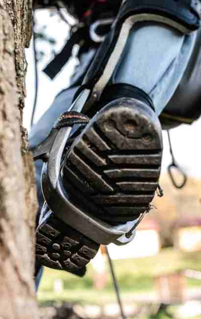 Cheektowaga Tree Service