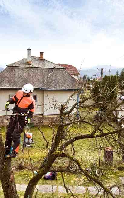 Clarence Tree Service