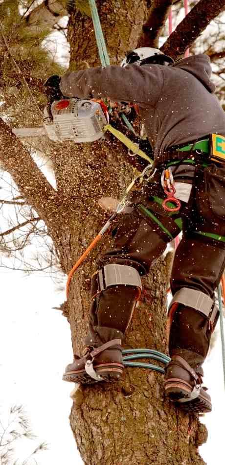 Depew Tree Service