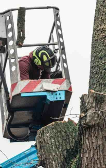 East Amherst Tree Service