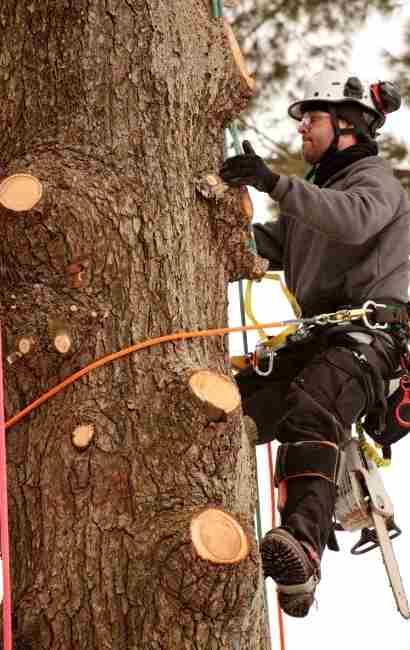 Angola Tree Service