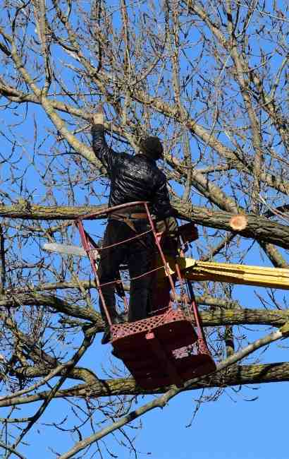 Alden Tree Service