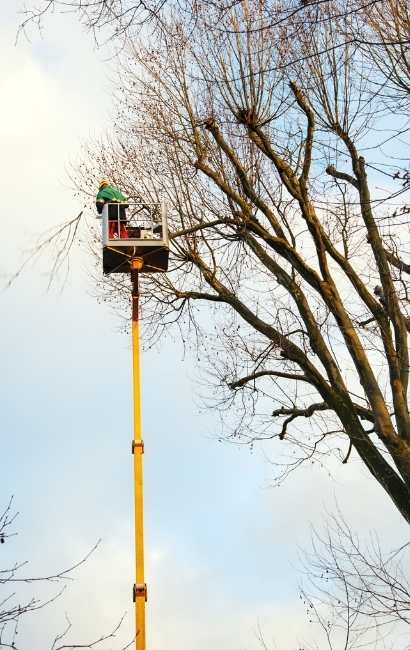 West Seneca tree service
