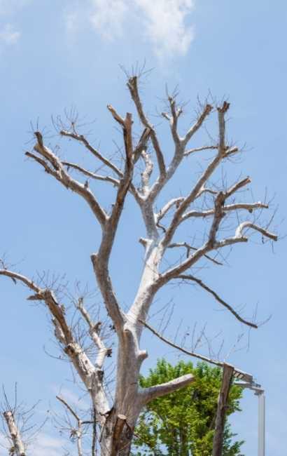 Williamsville tree service near me