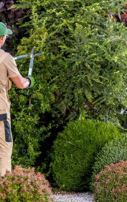 Youngstown Tree Service
