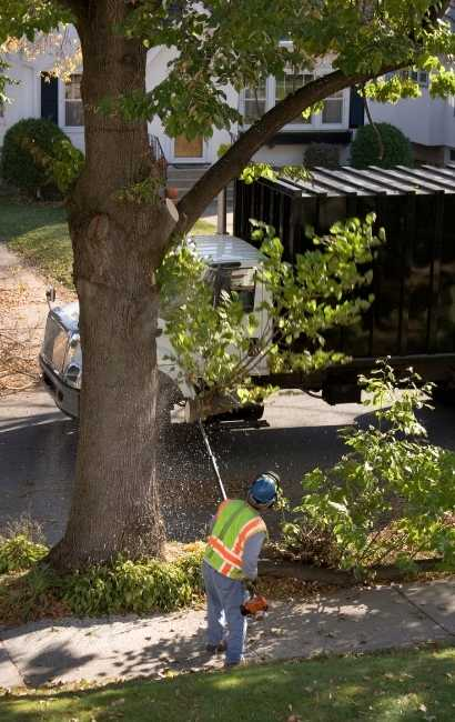 affordable Grand Island Tree Service