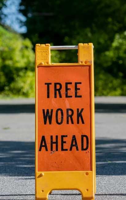 best Eden tree Service near me
