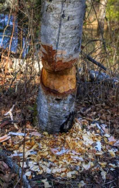 best Eden tree Service