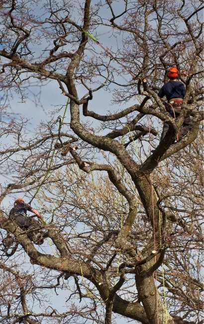 best Evans tree Service