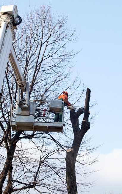 best Lake View tree service