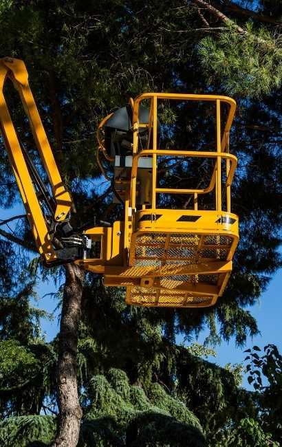 best Newstead tree service