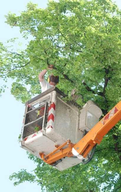 best Niagara falls tree service near me