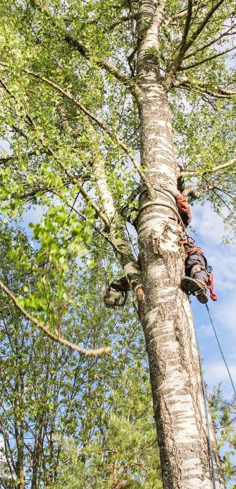best Wilson Tree Service
