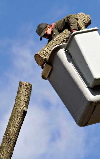 best Youngstown Tree Service