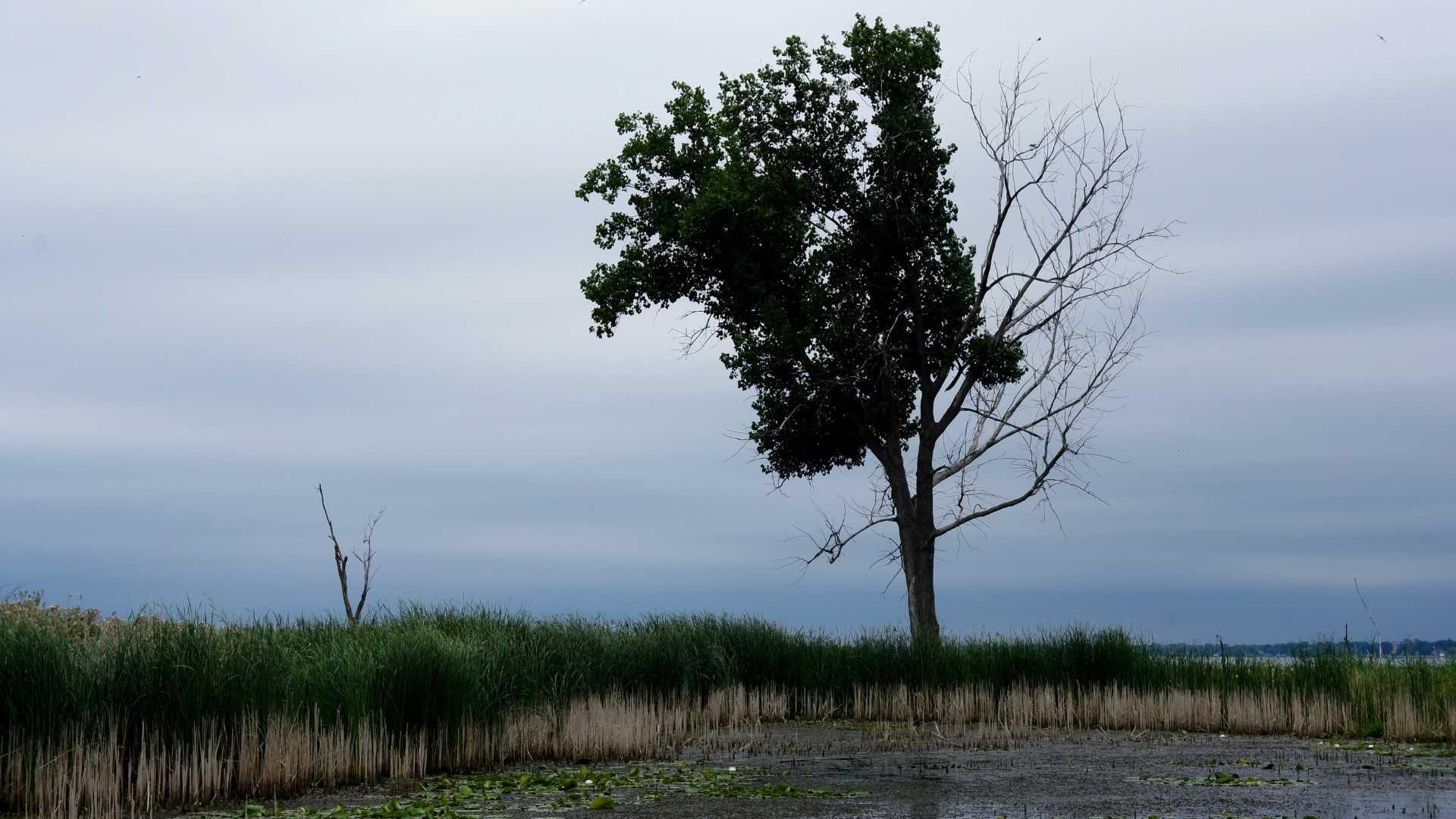 reasons for half dead tree