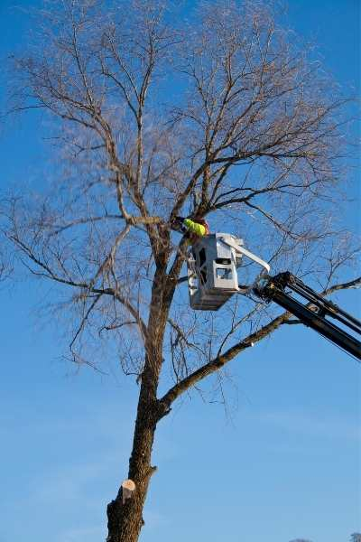 tree crown reduction near me