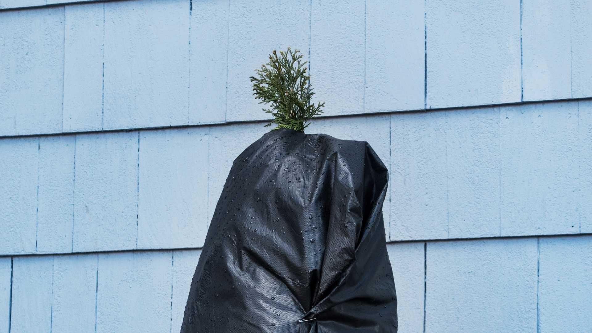 tree plastic cover